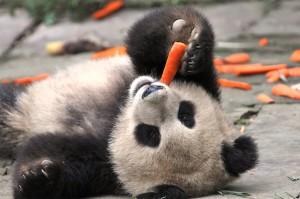 One Day Panda & Buddha